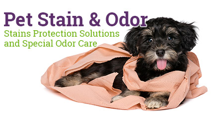 Pet Stains Removal